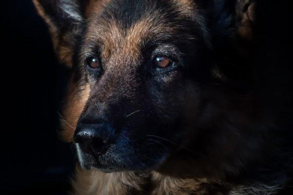 les chiens et les rabins